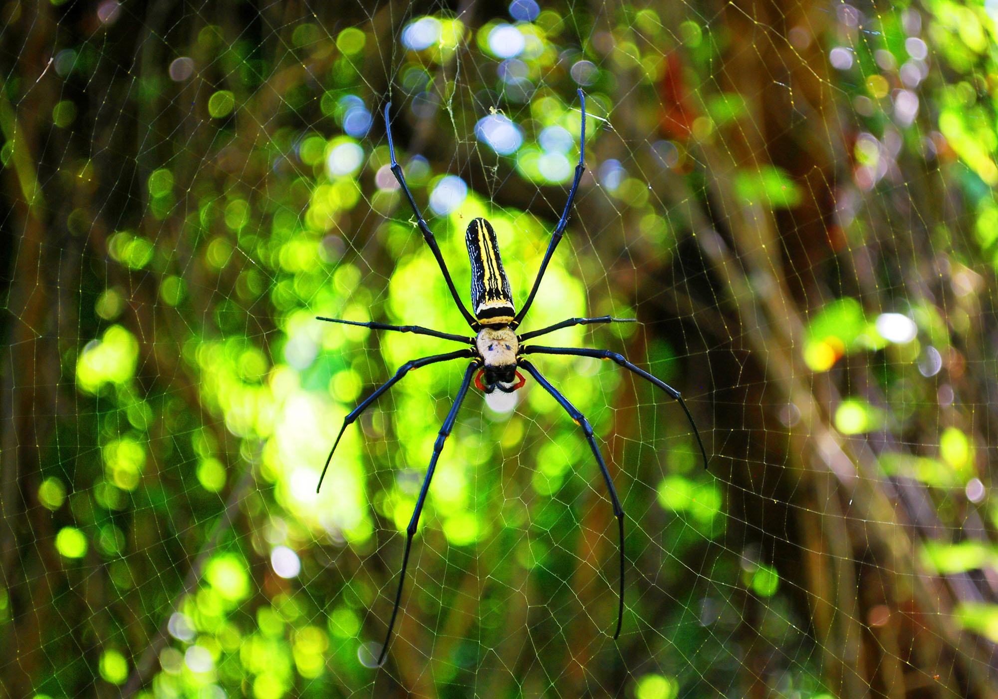 animal-arachnid-blur-276430